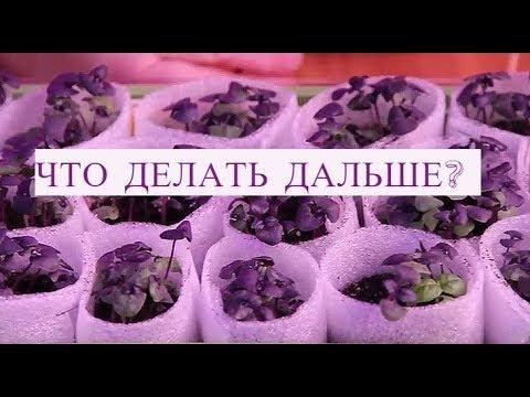Вопрос: Как посеять базилик в улитку?