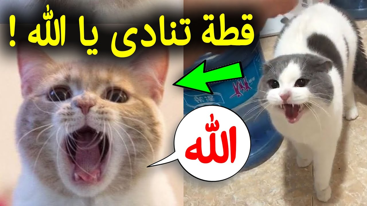 سبحان الله،7 حيوانات تتكلم مثل البشر تماماً وتذكر الله امام الاف المسلمين وانتم غافلون عنها !!