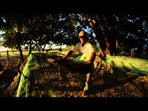 Rede de Sementes do Xingu: Como secar e armazenar sementes florestais?