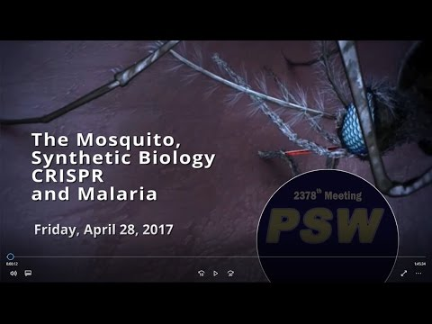PSW 2378 The Mosquito, Synthetic Biology, CRISPR, and Malaria