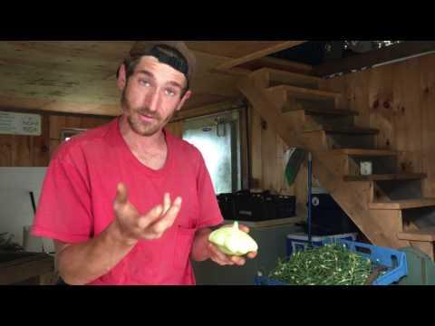 How To Prepare Patty Pan Squash