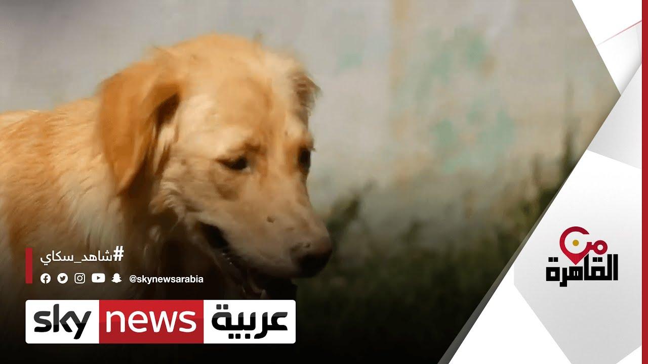 عقوبات تنتظر المخالفين لشروط اقتناء الكلاب في مصر | #من_القاهرة  - نشر قبل 5 ساعة