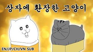 [짐승친구들] 상자에 환장한 고양이