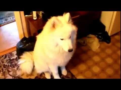 собака встречает хозяина!