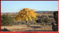 104 A La Jara Ranch Trail, Galisteo, NM 87540