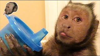 Capuchin Monkey and a Sippy Cup!