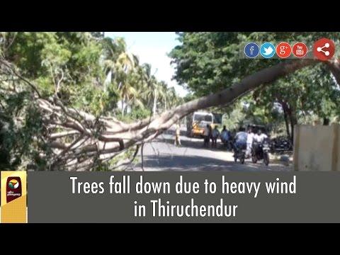 Trees fall down due to heavy wind in Thiruchendur