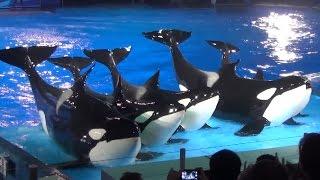 Light Up the Night Full Show - SeaWorld Orlando August 2014