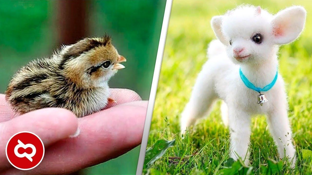 45 Gambar Binatang Yg Unik Gratis Terbaik