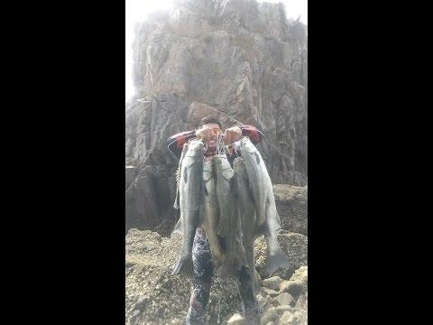 농어  2016년8월 태안농어사냥 Angler 바늘털이 �