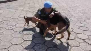 Cão se emociona após ver o dono, depois de 6 meses no Haiti