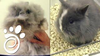 Кролики И Стресс: Как Уберечь Вашего Кролика. Все О Домашних Животных.
