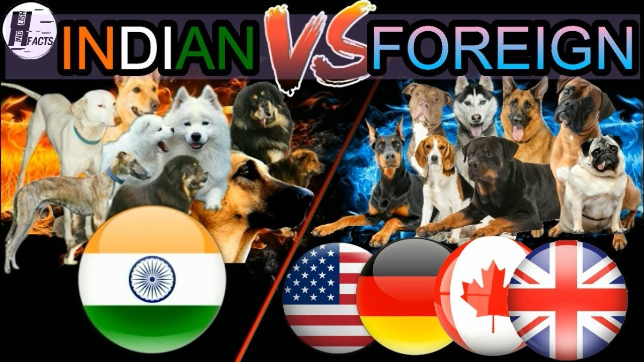 INDIAN Dog Breeds VS FOREIGN Dog Breeds | Hindi | COMPARISON | DOG VS DOG | HINGLISH FACTS
