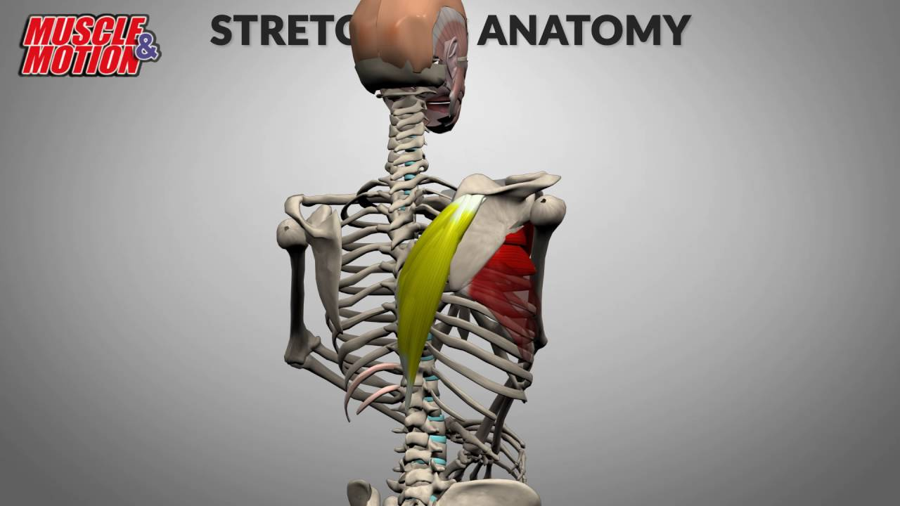 Stretching Anatomy - YouTube
