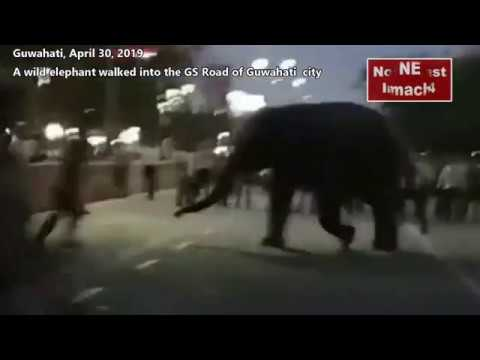 A wild elephant walked into the GS Road of Guwahati city