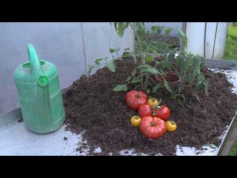 tomaten richtig pflanzen und gie en tipps vom fachmann youtube. Black Bedroom Furniture Sets. Home Design Ideas