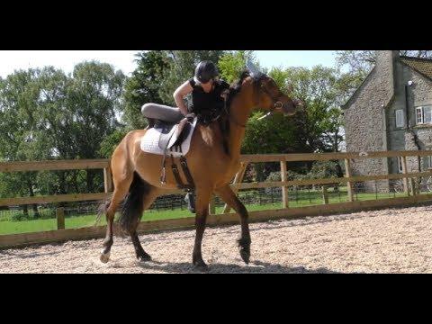 Backing my Arab Horse Farouk, Day Three