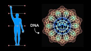 How Sacred Geometry is embedded in Your DNA - Secrets of Geometric Art