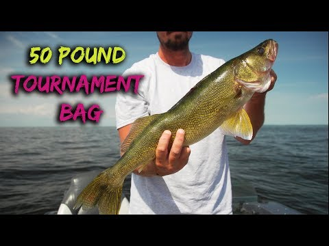 Lake Of The Woods Walleye Tournament (Warrior Boats)