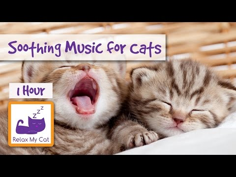 1 HOUR OF MUSIC FOR CATS! Soothe Your Cat With Relaxing Music