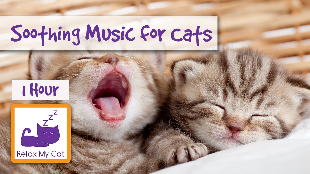 1 Hour Of Music For Cats Soothe Your Cat With Relaxing Music Youtube