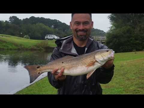 Hilton Head Island Redfish in the Canal