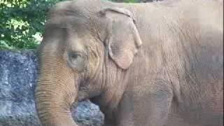 Красивое животное - слон! Смотрите..
