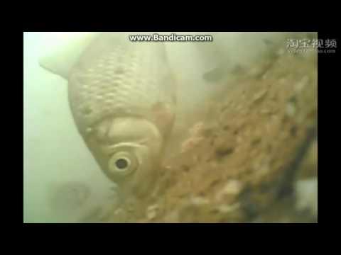 กล้องตกปลาใต้น้ำติดเบ็ดตกปลา