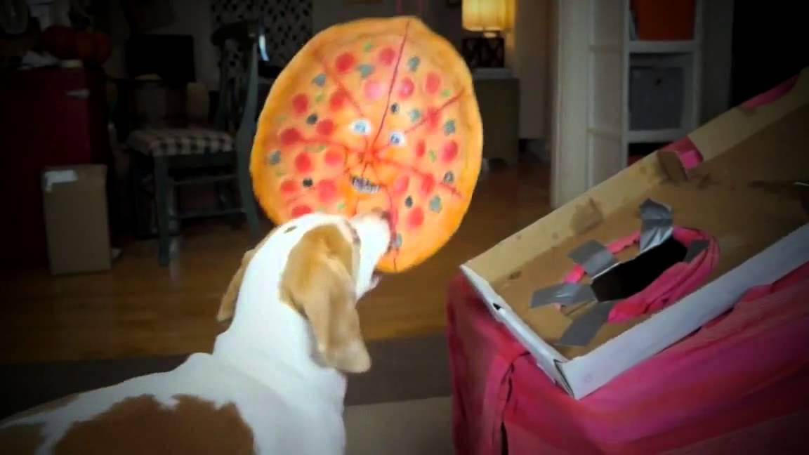 Dogs vs. Talking Pizza Prank Funny Dogs Maymo &amp Penny