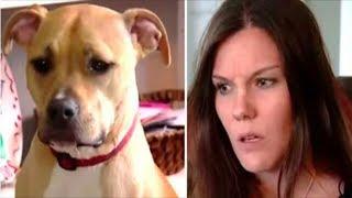Kadın ve köpeğin çiftleşmesi
