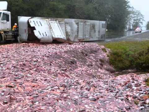 Semi-truck Wrecks - Rig Accidents - Truck Crashes