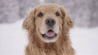 Top Dog Film Festival 2018 full trailer au