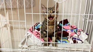 子猫をケージに閉じ込めたら鳴き叫んで猛アピールしてきましたw