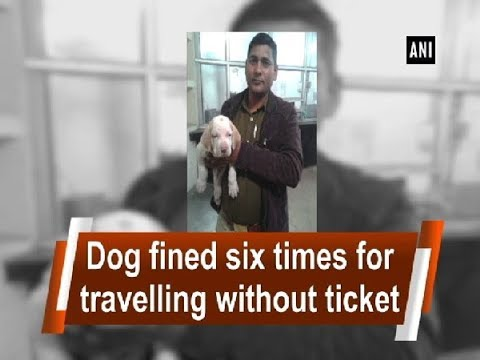 Dog fined six times for travelling without ticket - Uttar Pradesh News