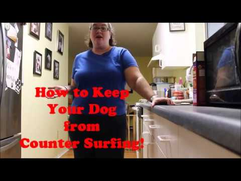 How to Keep Your Dog From Counter Surfing!