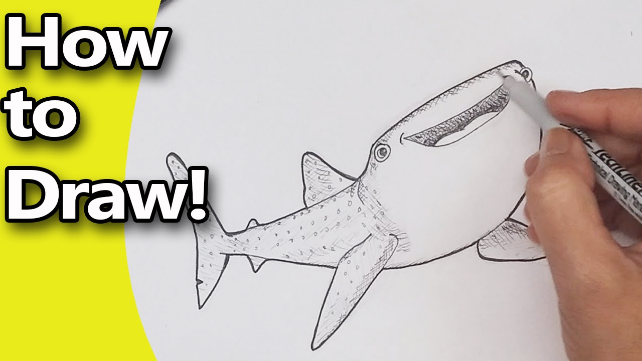Uncategorized How To Draw A Whale Shark how to draw finding dory characters destiny the whale shark step by drawing tutorial youtube