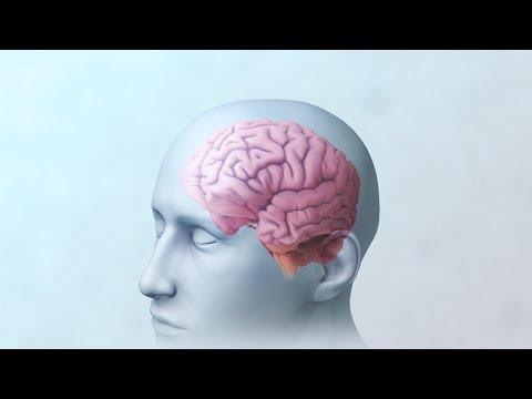 Brain And Mental Health | Nucleus Health