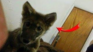 Семья берет беспризорного щенка, но их ждет большой сюрприз