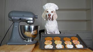 Dog Bakes Favorite Cookies Recipes! Chef Dog Maymo Makes Sugar, Peanut Butter & Oatmeal Cookies