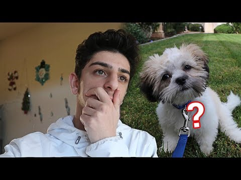 What REALLY happened to my new dog..? | FaZe Rug
