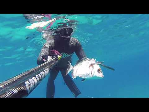 Seabream-Sargos-Σαργός-Desirable white prey Cyprus Spearfishing