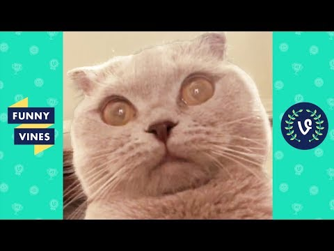 TRY NOT TO LAUGH – Funny ANIMAL Videos | January 2019