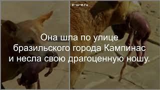 Животные лучше чем некоторые люди
