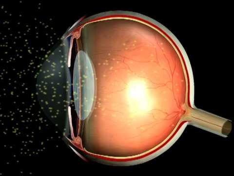 Как свет проходит через глаз