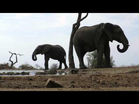 madikwe the bush house elephants
