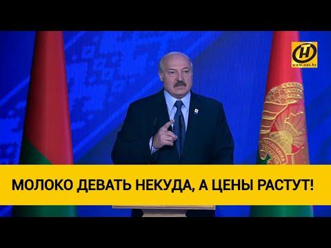 Лукашенко про рост цен: Идиотизм полный! Молоко девать некуда, а цены растут!