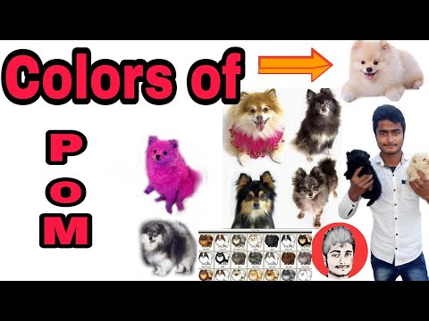 Colors of culture/toy Pomeranian | Watch Them All |