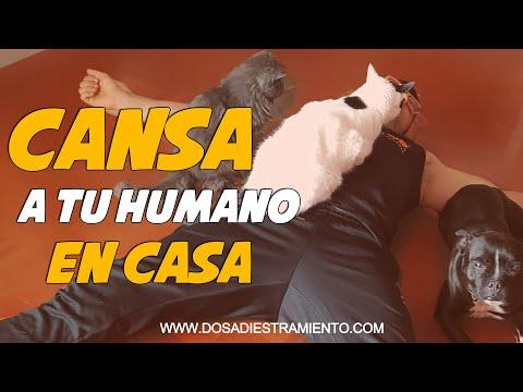 Perros y Gatos en Cuarentena 🚨🐶😺🏡| Resistiré 2020 💪🏼