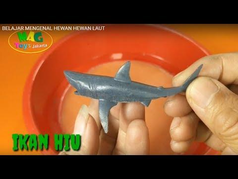 belajar-mengenal-hewan-hewan-laut- -learn-to-know-animal-animals
