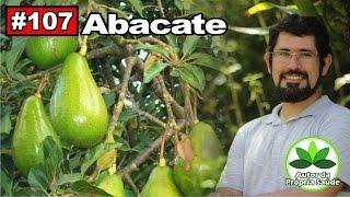 Autor da Própria Saúde - Abacate [diabetes, colesterol, reumatismo, hipertensão, cistite] thumbnail